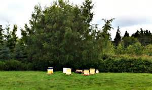 beeyard