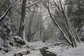 snow-forst